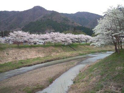 武庫川桜堤